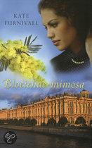 Bloeiende mimosa