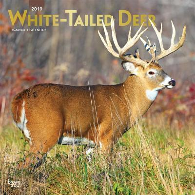 White Tailed Deer 2019 Calendar