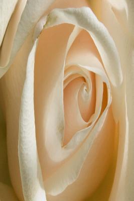 Peach Rose Flower Journal