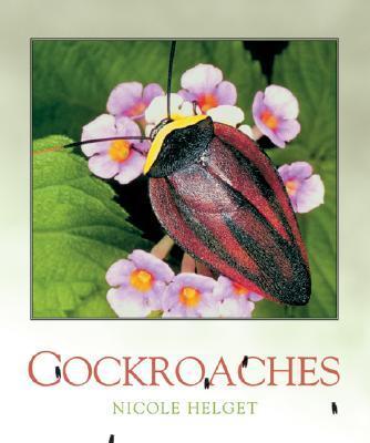Cochroaches