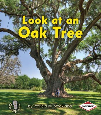 Look at an Oak Tree