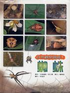 自然觀察圖鑑1─蜘蛛