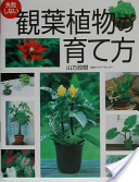 失敗しない観葉植物の育て方