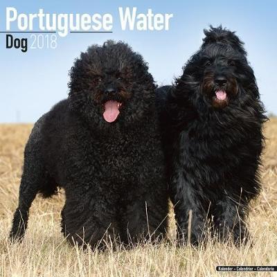 Portuguese Waterdog