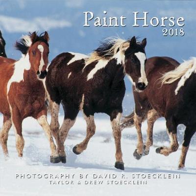 Paint Horse 2018 Calendar