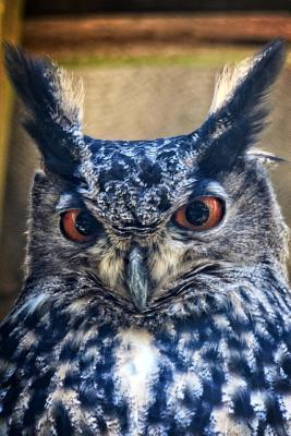 Eagle Owl Bird Journal