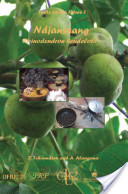 Fruits for the Future 7: Ndjanssang Ricinodendron heudelotii