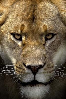 Mindblowing Cute Lion Journal