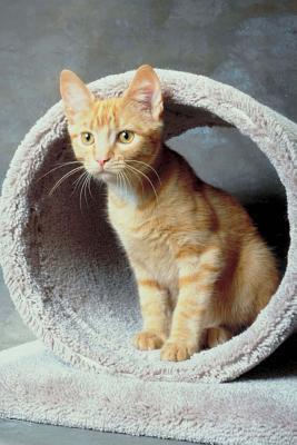 Cute Tabby Kitten Pl...