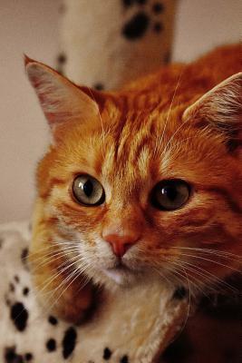 A Mackerel Cat Ready...