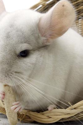 An Adorable White Ch...