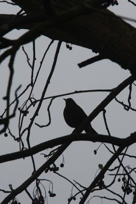 Silhouette of a Bird on a Tree Journal