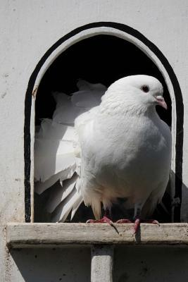 White Dove in a Dovecote Aviary Bird Journal
