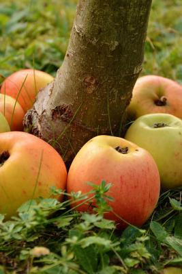 Apples Ringed Around a Tree Journal