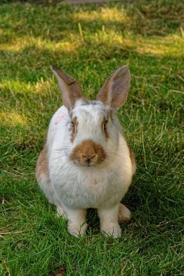 A Single Hare Bunny Rabbit Journal