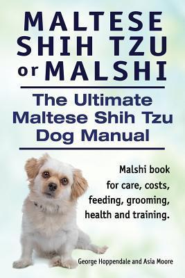Maltese Shih Tzu or ...