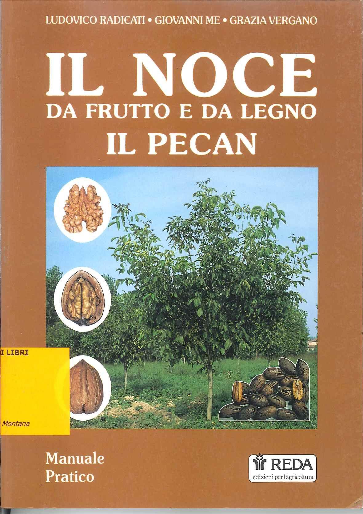 Il noce da frutto e da legno - Il pecan