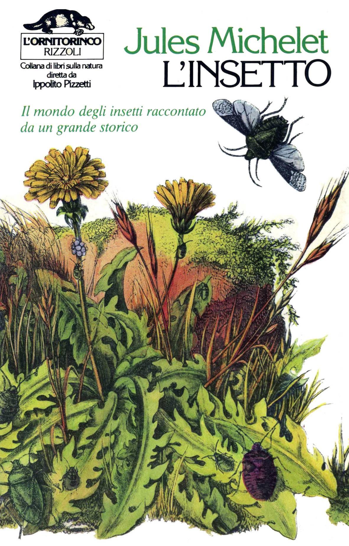 L'insetto