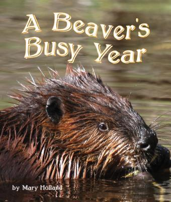 The Beavers' Busy Year