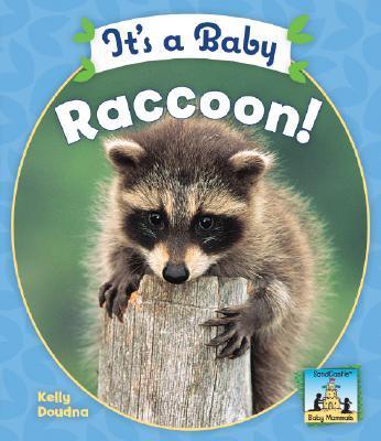 It's a Baby Raccoon
