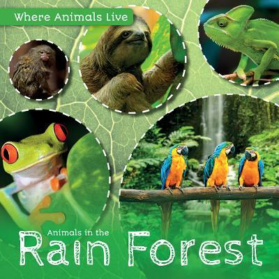 Animals in the Rain Forest