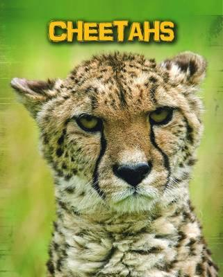 Cheetahs (Living in the Wild