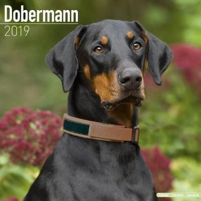 Dobermann Calendar 2019 (Square)