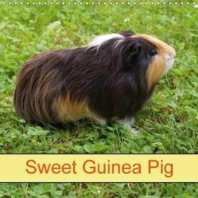 Sweet Guinea Pig (Wa...