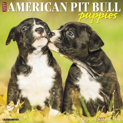 American Pit Bull Puppies 2018 Calendar
