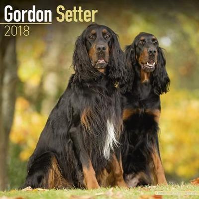 Gordon Setter