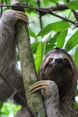 Sloth in a Tree Journal