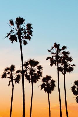 Palm Trees Silhouett...