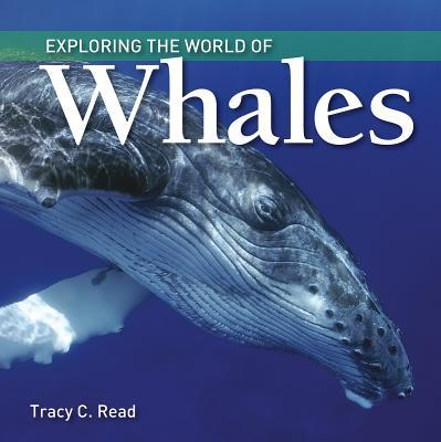 Exploring the World of Whales