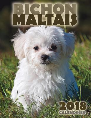 Bichon Maltais 2018 ...
