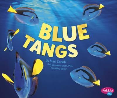 Regal Tangs (Sea Life)