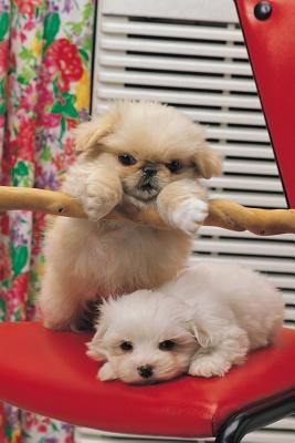 Cute Puppies Playing Dog Photo Journal