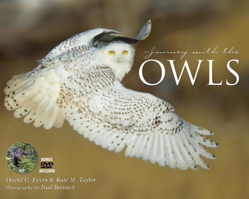 Journey With the Owl