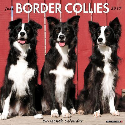 Just Border Collies ...