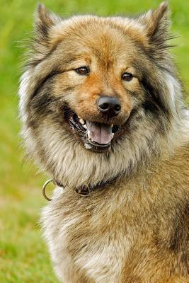 Happy Eurasier Dog Journal
