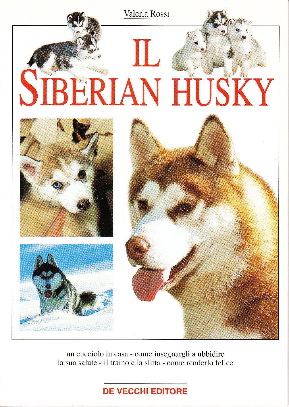 Il siberian husky