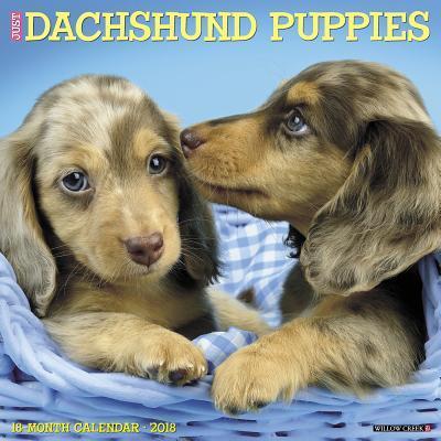 Just Dachshund Puppi...