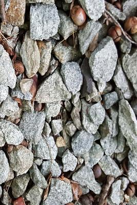 Journal Rocks Acorns