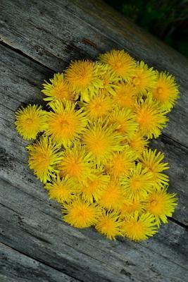 Dandelion Flower Heart Journal