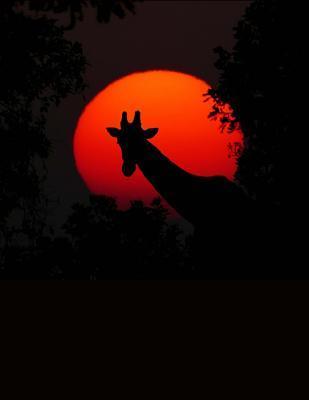 Giraffe in an Africa Sunset Journal
