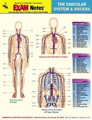 Vascular System & Vi...