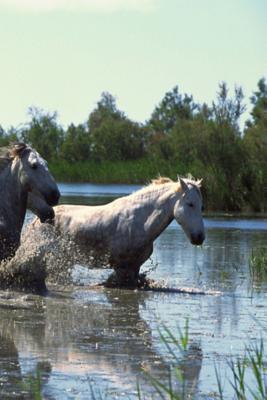 Journal Horses Cross...
