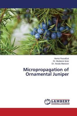 Micropropagation of Ornamental Juniper