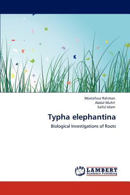 Typha elephantina