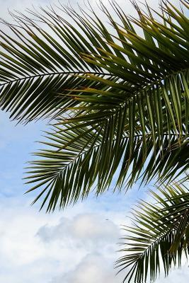Palm Fronds in the Sun Journal