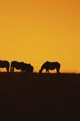 Journal Horses Sunset Silhouettes Equine